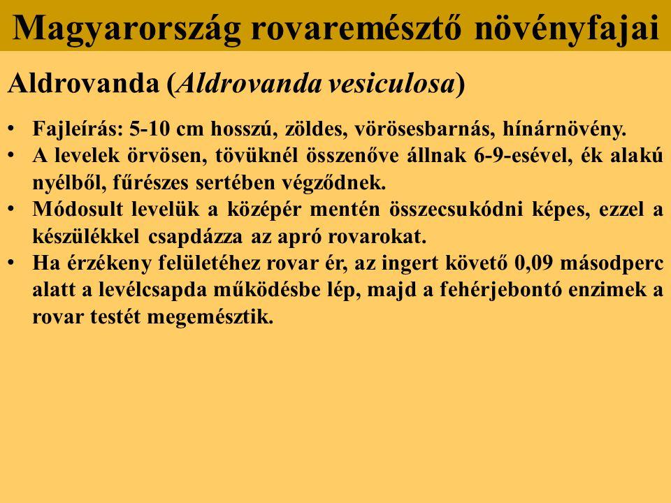 Aldrovanda (Aldrovanda vesiculosa) Fajleírás: 5-10 cm hosszú, zöldes, vörösesbarnás, hínárnövény.