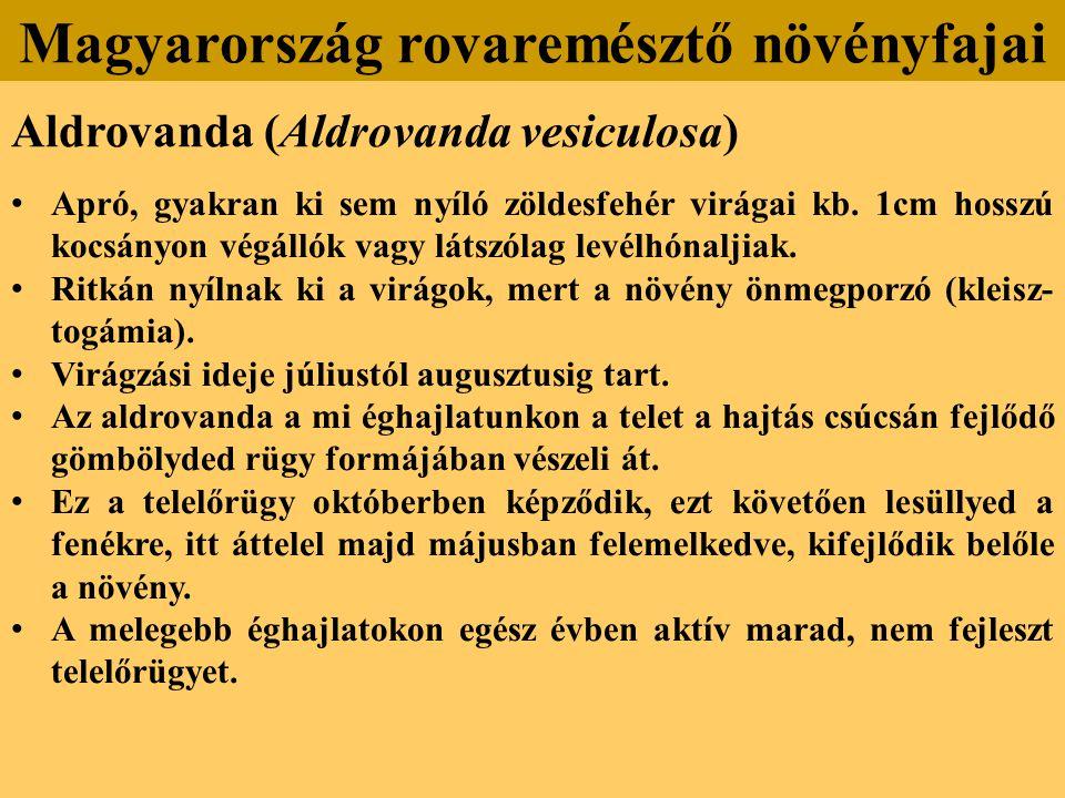 Aldrovanda (Aldrovanda vesiculosa) Apró, gyakran ki sem nyíló zöldesfehér virágai kb.