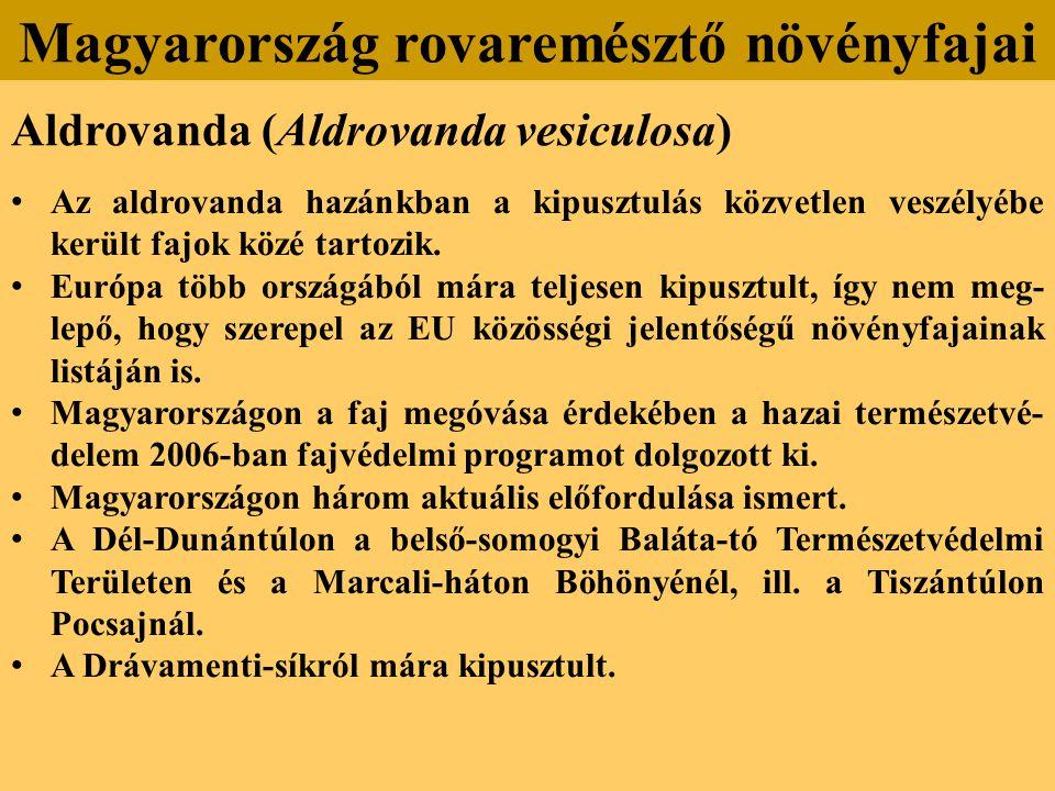 Aldrovanda (Aldrovanda vesiculosa) Az aldrovanda hazánkban a kipusztulás közvetlen veszélyébe került fajok közé tartozik.