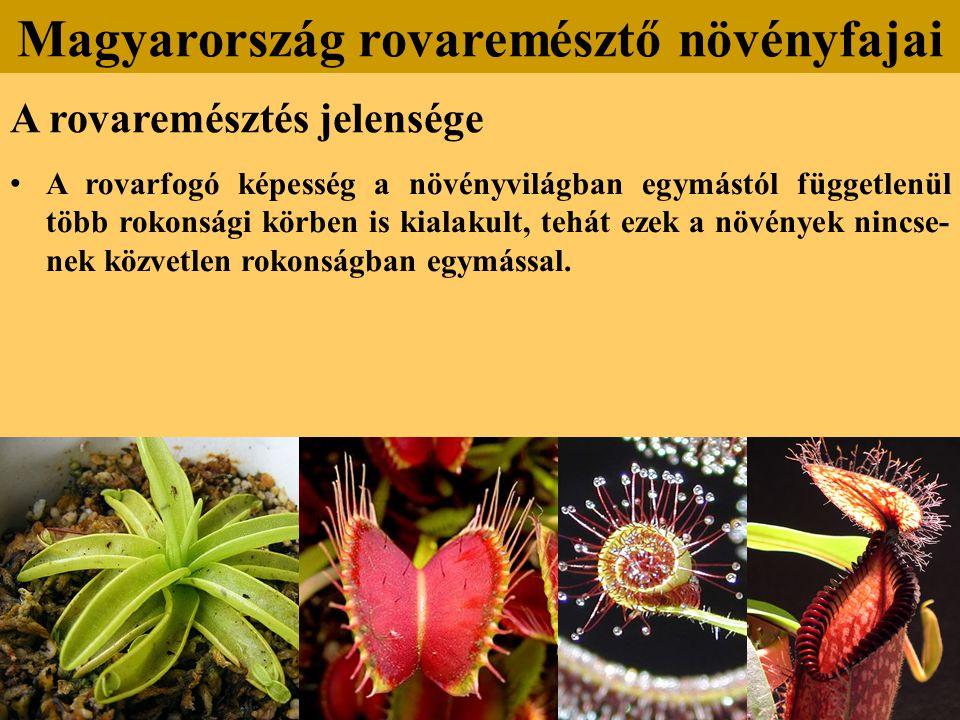 A rovaremésztés jelensége A rovarfogó képesség a növényvilágban egymástól függetlenül több rokonsági körben is kialakult, tehát ezek a növények nincse- nek közvetlen rokonságban egymással.