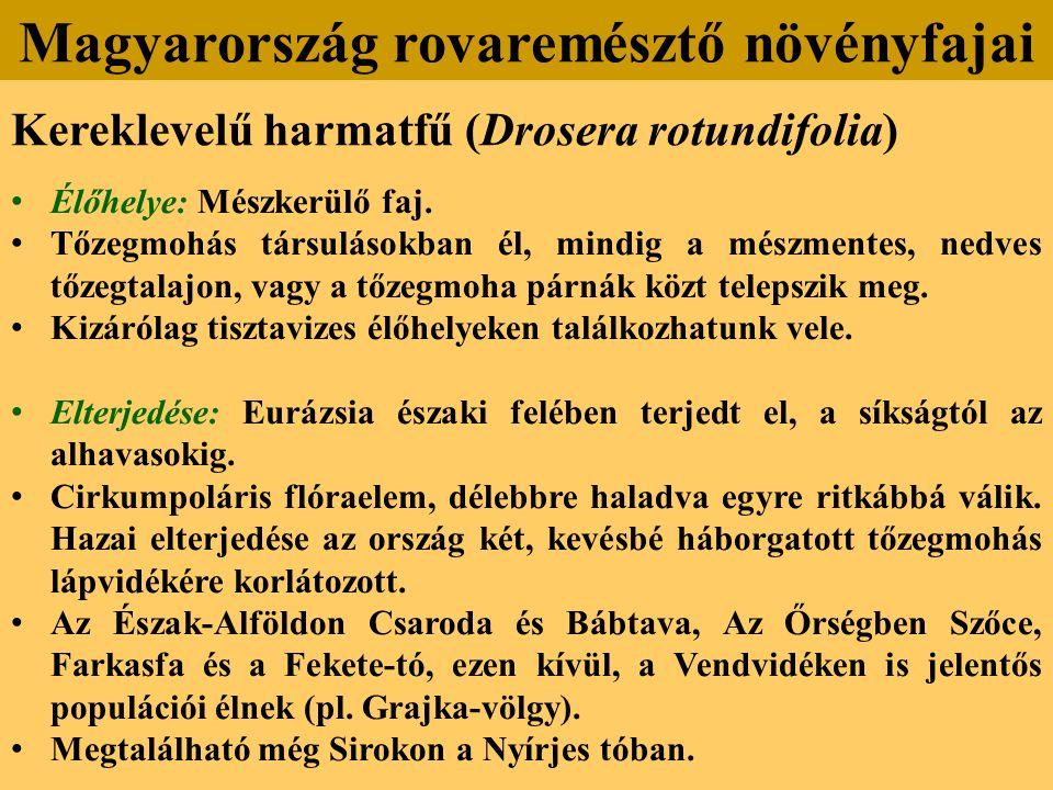 Kereklevelű harmatfű (Drosera rotundifolia) Élőhelye: Mészkerülő faj.