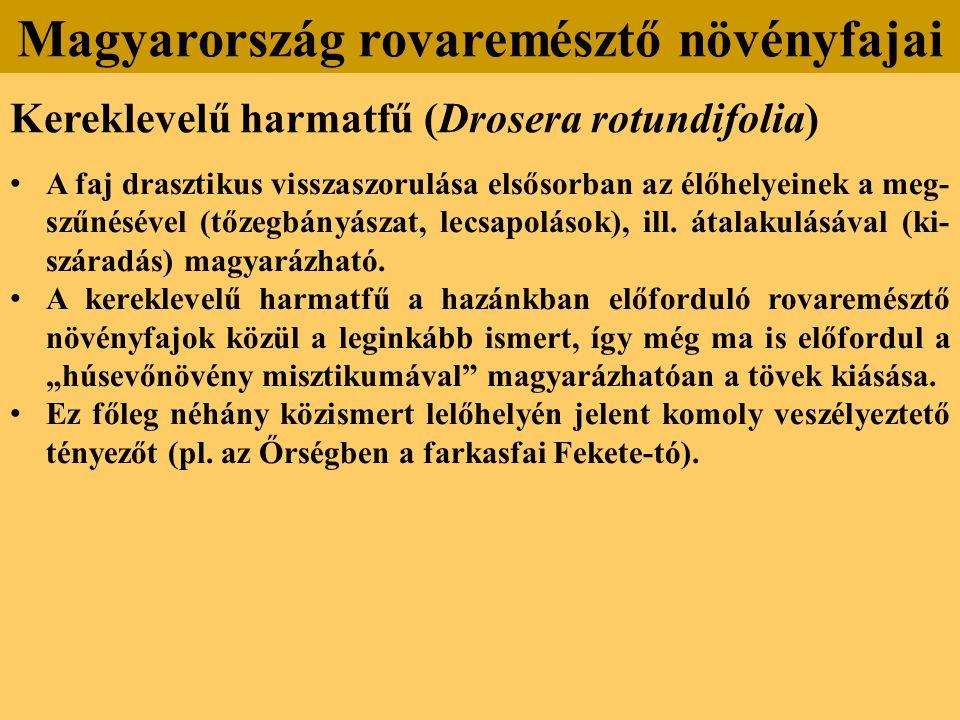 Kereklevelű harmatfű (Drosera rotundifolia) A faj drasztikus visszaszorulása elsősorban az élőhelyeinek a meg- szűnésével (tőzegbányászat, lecsapolások), ill.