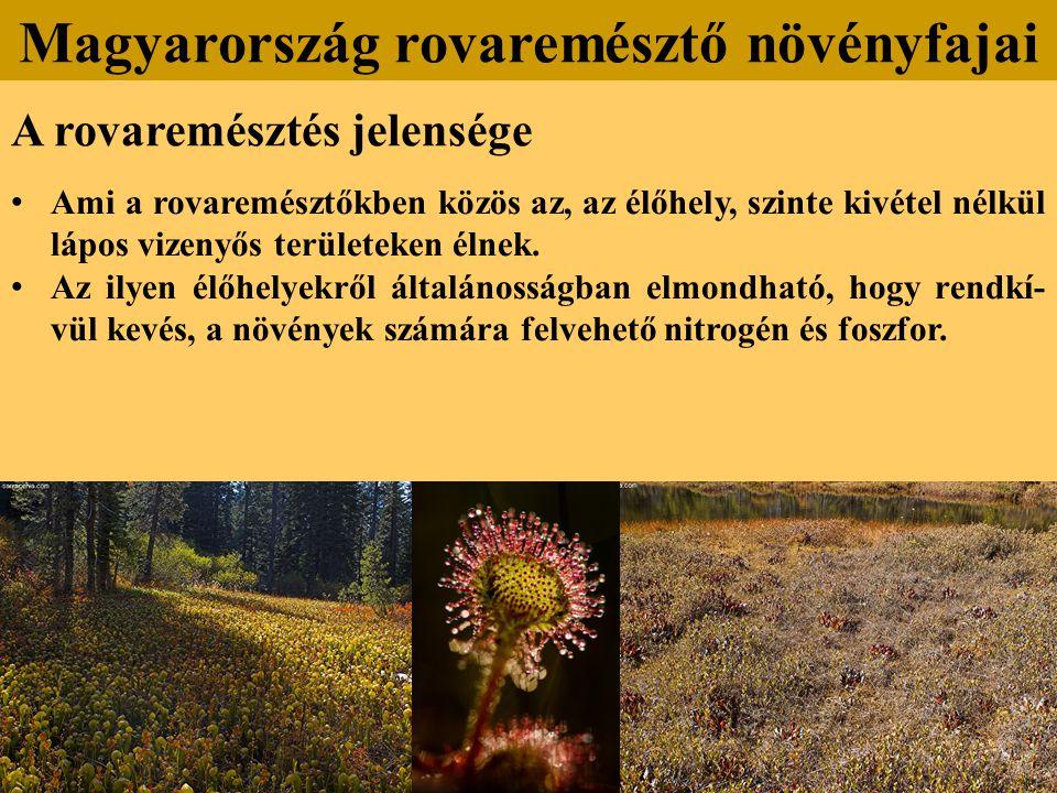 A rovaremésztés jelensége Ami a rovaremésztőkben közös az, az élőhely, szinte kivétel nélkül lápos vizenyős területeken élnek.
