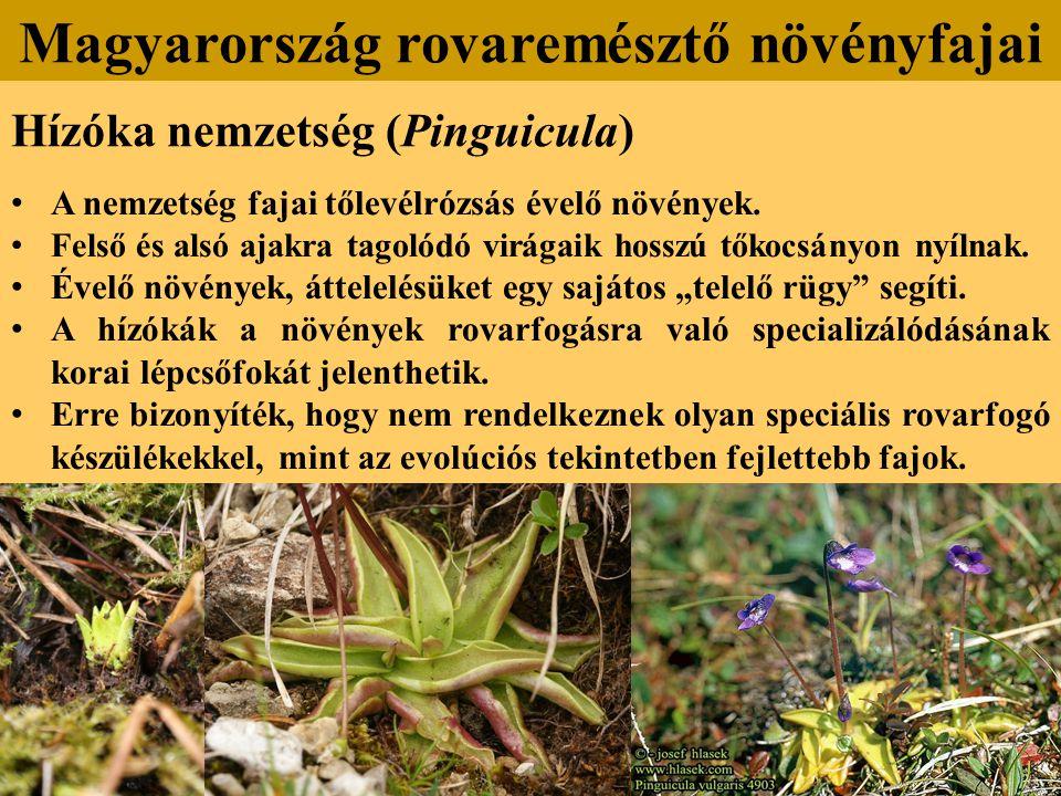 Hízóka nemzetség (Pinguicula) Magyarország rovaremésztő növényfajai A nemzetség fajai tőlevélrózsás évelő növények.