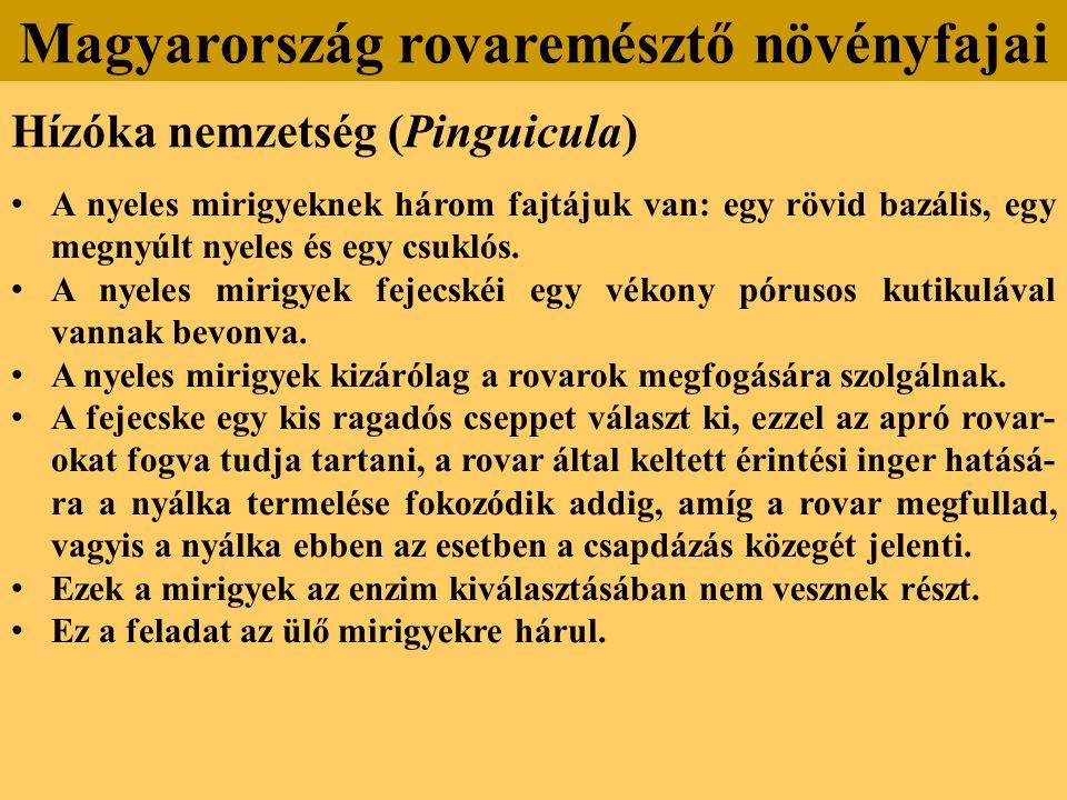 Hízóka nemzetség (Pinguicula) A nyeles mirigyeknek három fajtájuk van: egy rövid bazális, egy megnyúlt nyeles és egy csuklós.