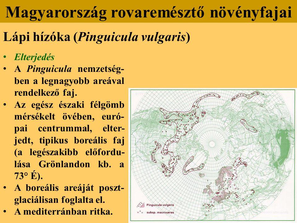 Lápi hízóka (Pinguicula vulgaris) Elterjedés A Pinguicula nemzetség- ben a legnagyobb areával rendelkező faj.