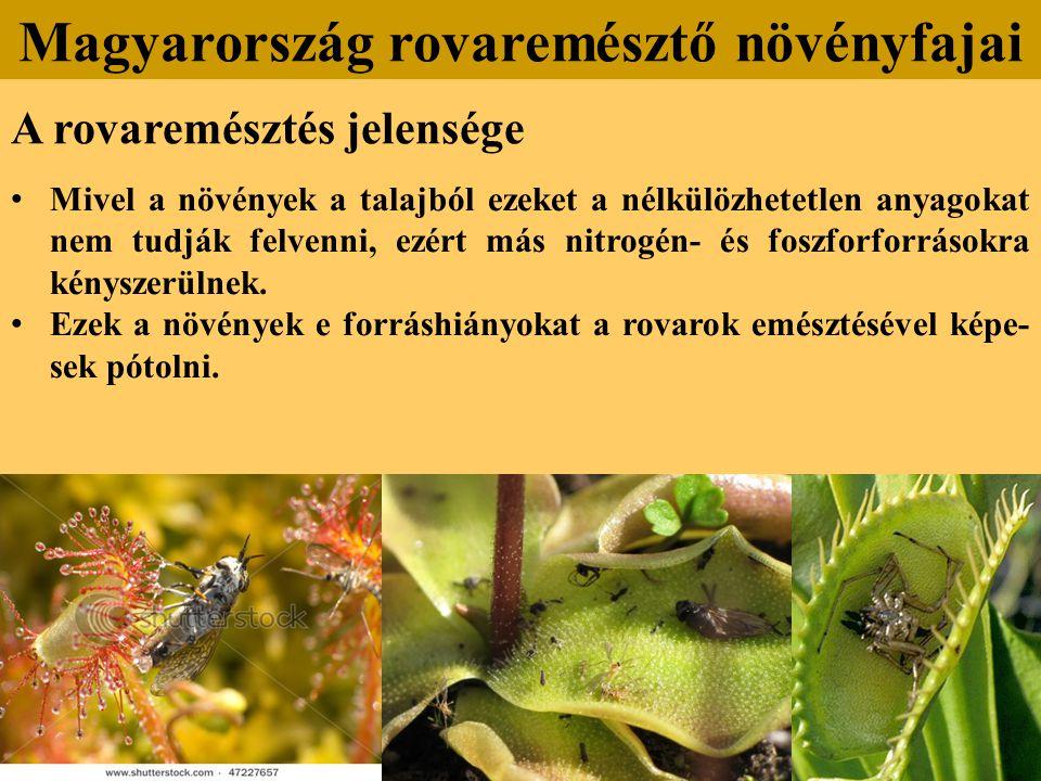 A rovaremésztés jelensége Mivel a növények a talajból ezeket a nélkülözhetetlen anyagokat nem tudják felvenni, ezért más nitrogén- és foszforforrásokra kényszerülnek.