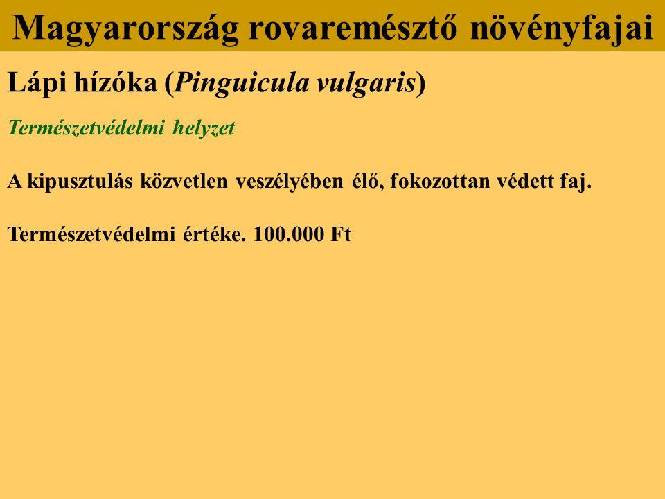 Lápi hízóka (Pinguicula vulgaris) Természetvédelmi helyzet A kipusztulás közvetlen veszélyében élő, fokozottan védett faj.