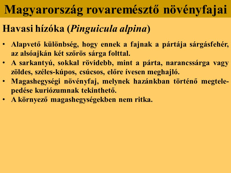 Havasi hízóka (Pinguicula alpina) Alapvető különbség, hogy ennek a fajnak a pártája sárgásfehér, az alsóajkán két szőrös sárga folttal.