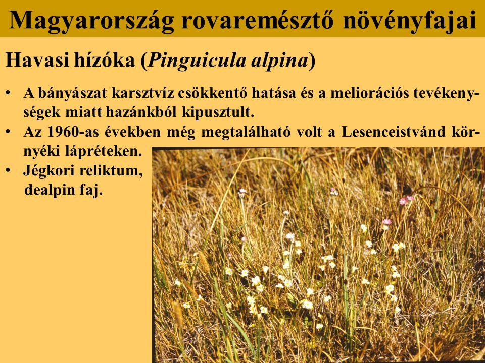 Havasi hízóka (Pinguicula alpina) A bányászat karsztvíz csökkentő hatása és a meliorációs tevékeny- ségek miatt hazánkból kipusztult.