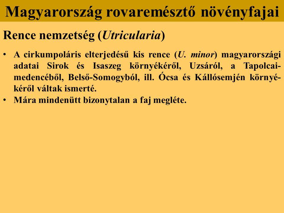 Rence nemzetség (Utricularia) A cirkumpoláris elterjedésű kis rence (U.