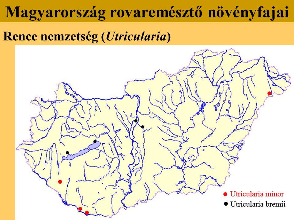 Rence nemzetség (Utricularia) Magyarország rovaremésztő növényfajai