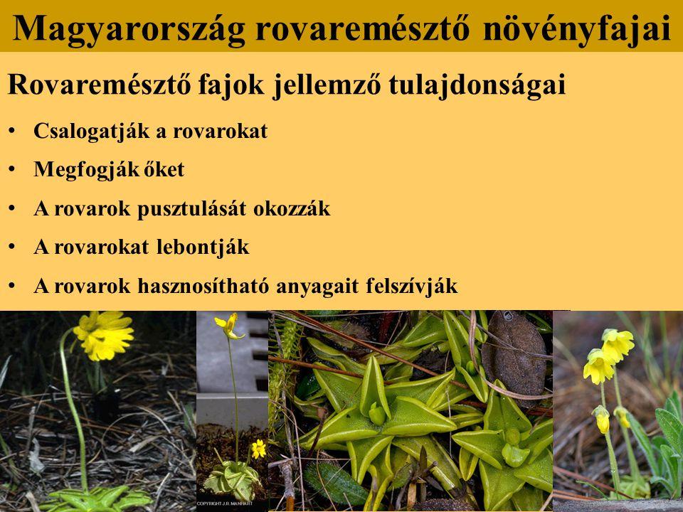 Rovaremésztő fajok jellemző tulajdonságai Csalogatják a rovarokat Megfogják őket A rovarok pusztulását okozzák A rovarokat lebontják A rovarok hasznosítható anyagait felszívják Magyarország rovaremésztő növényfajai