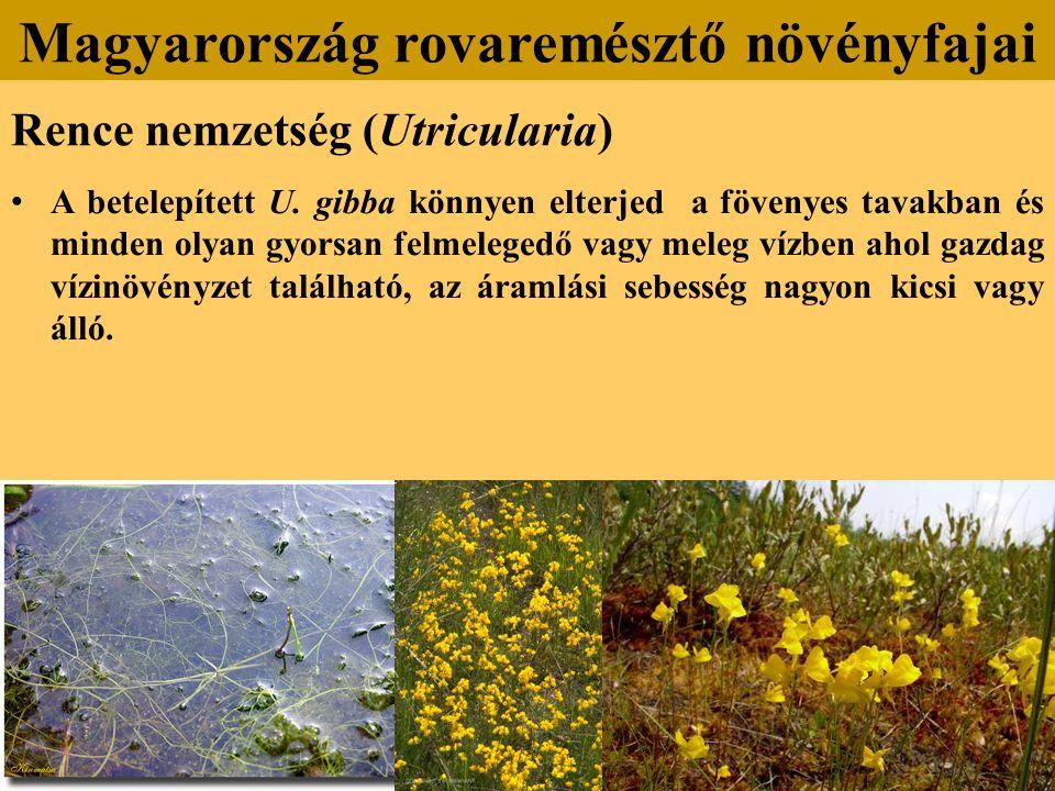 Rence nemzetség (Utricularia) A betelepített U.