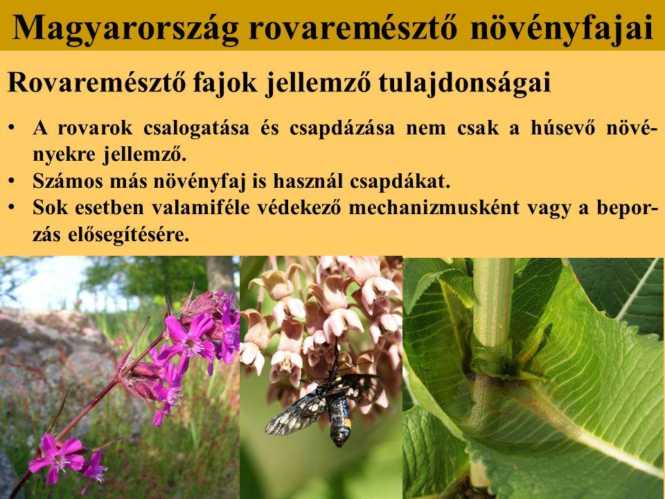Rovaremésztő fajok jellemző tulajdonságai A rovarok csalogatása és csapdázása nem csak a húsevő növé- nyekre jellemző.