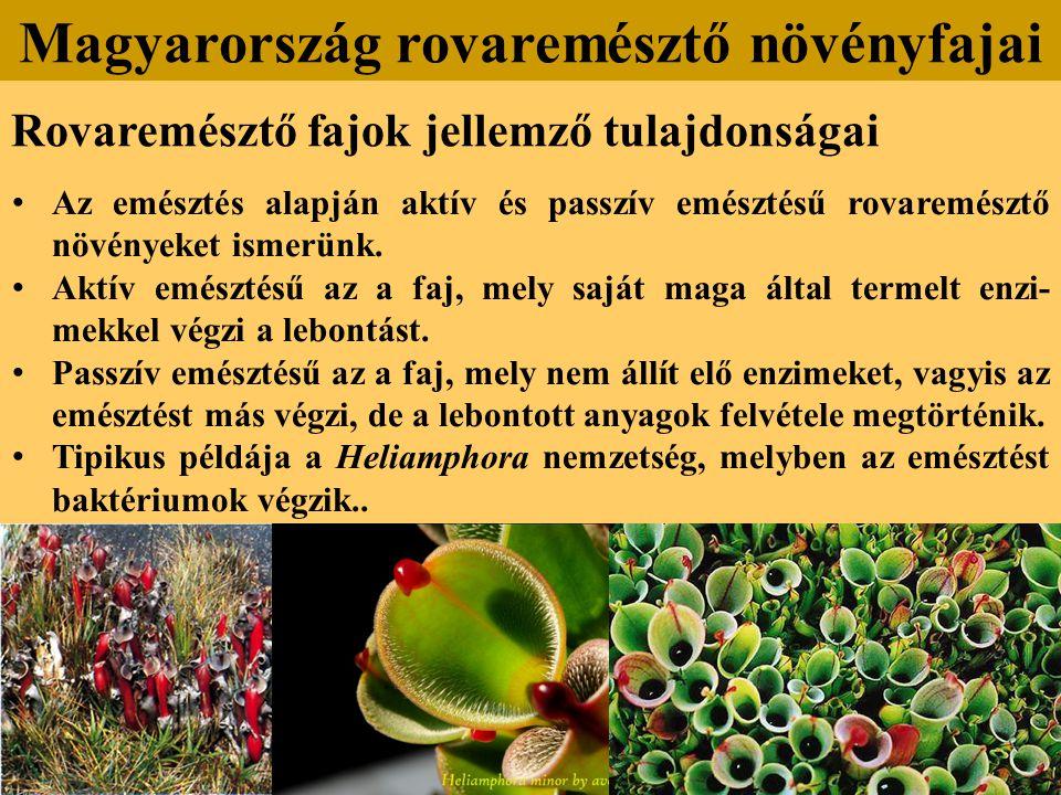 Rovaremésztő fajok jellemző tulajdonságai Az emésztés alapján aktív és passzív emésztésű rovaremésztő növényeket ismerünk.