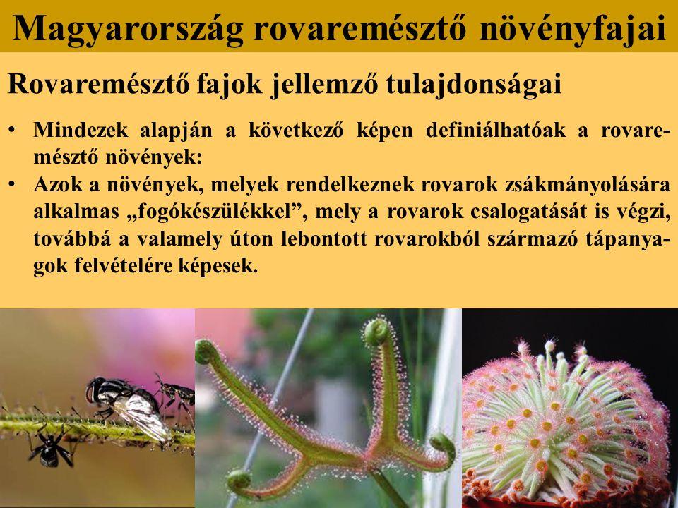 """Rovaremésztő fajok jellemző tulajdonságai Mindezek alapján a következő képen definiálhatóak a rovare- mésztő növények: Azok a növények, melyek rendelkeznek rovarok zsákmányolására alkalmas """"fogókészülékkel , mely a rovarok csalogatását is végzi, továbbá a valamely úton lebontott rovarokból származó tápanya- gok felvételére képesek."""