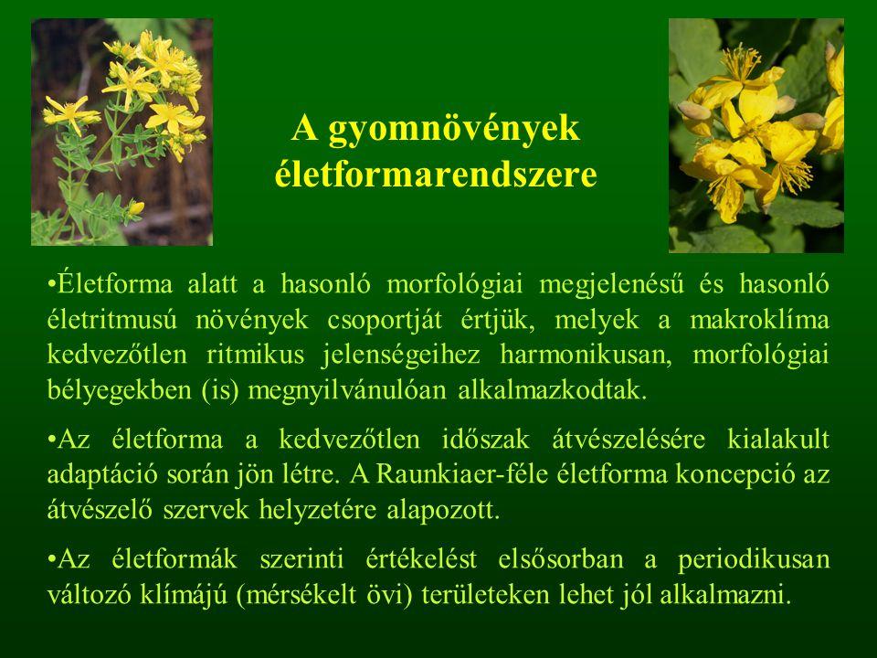 Életforma alatt a hasonló morfológiai megjelenésű és hasonló életritmusú növények csoportját értjük, melyek a makroklíma kedvezőtlen ritmikus jelenség