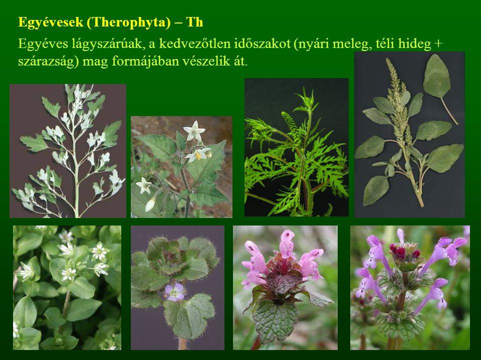 Egyévesek (Therophyta) – Th Egyéves lágyszárúak, a kedvezőtlen időszakot (nyári meleg, téli hideg + szárazság) mag formájában vészelik át.