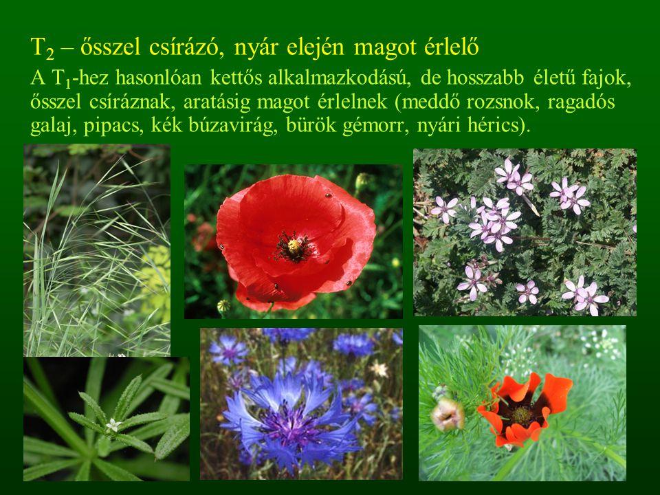 T 2 – ősszel csírázó, nyár elején magot érlelő A T 1 -hez hasonlóan kettős alkalmazkodású, de hosszabb életű fajok, ősszel csíráznak, aratásig magot é