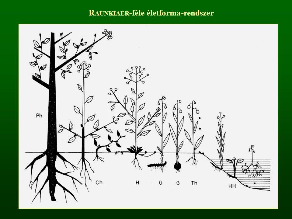 Mega- és Mezophanerophyta – fák (MM) Fás növények, melyek 5 m-nél magasabbak, akroton elágazásúak, törzset és koronát fejlesztenek, átvészelő szervük fedett rügy.