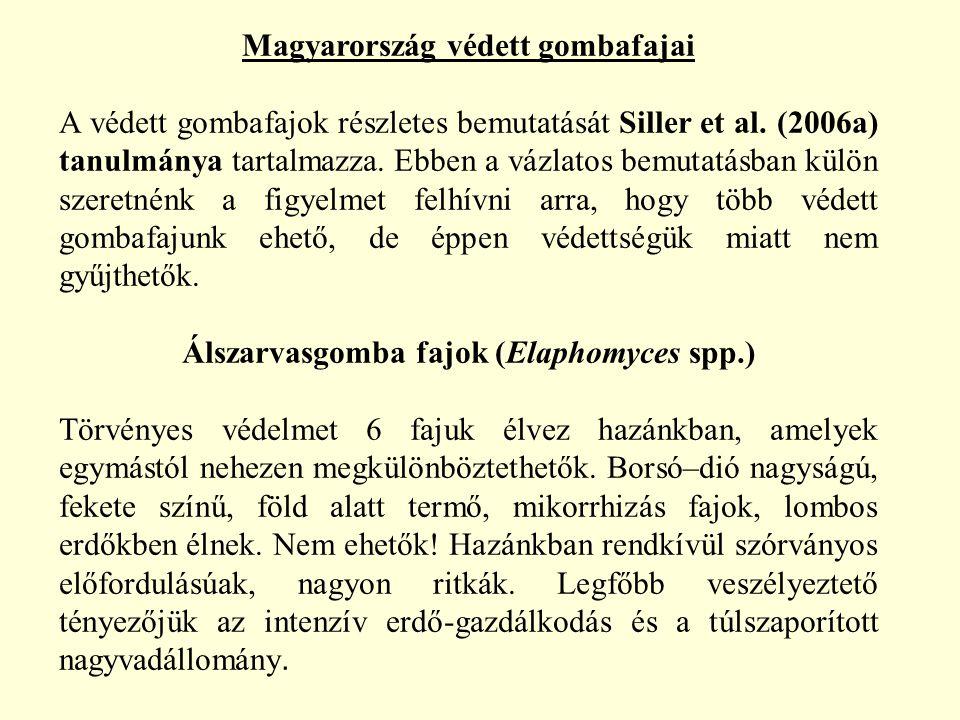 Magyarország védett gombafajai A védett gombafajok részletes bemutatását Siller et al. (2006a) tanulmánya tartalmazza. Ebben a vázlatos bemutatásban k