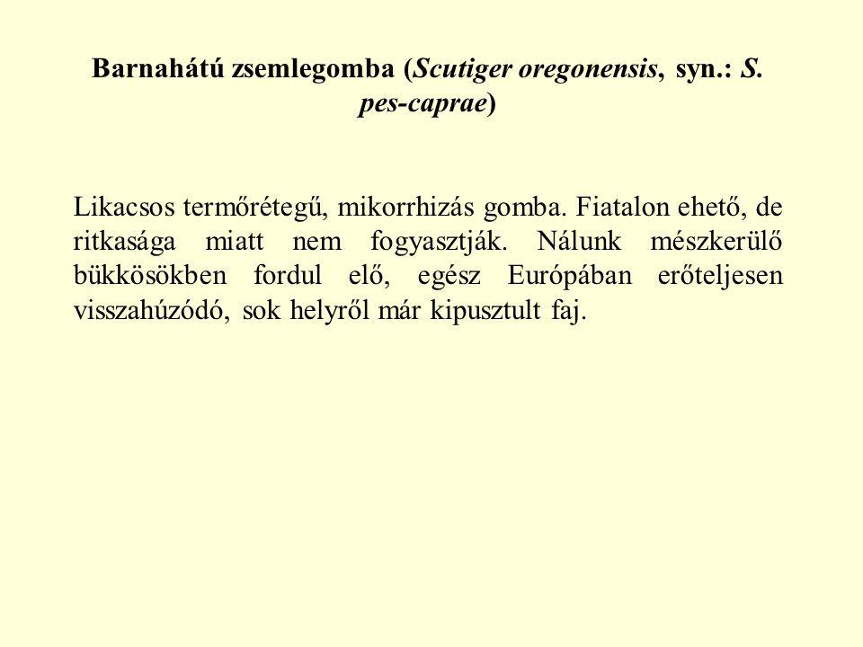 Barnahátú zsemlegomba (Scutiger oregonensis, syn.: S. pes-caprae) Likacsos termőrétegű, mikorrhizás gomba. Fiatalon ehető, de ritkasága miatt nem fogy