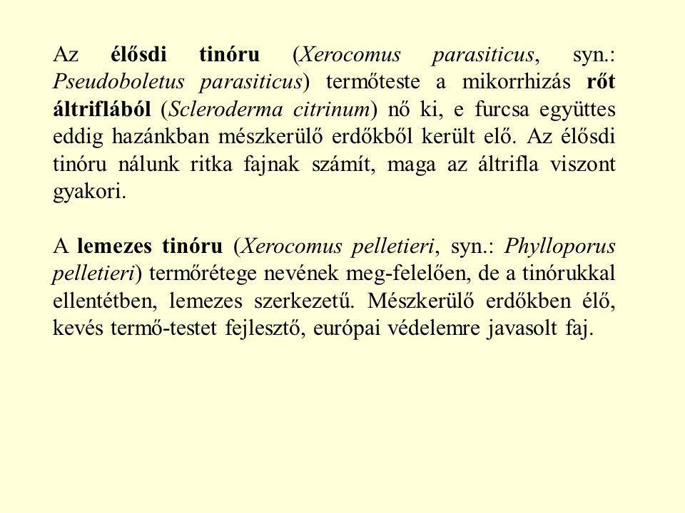 Az élősdi tinóru (Xerocomus parasiticus, syn.: Pseudoboletus parasiticus) termőteste a mikorrhizás rőt áltriflából (Scleroderma citrinum) nő ki, e fur