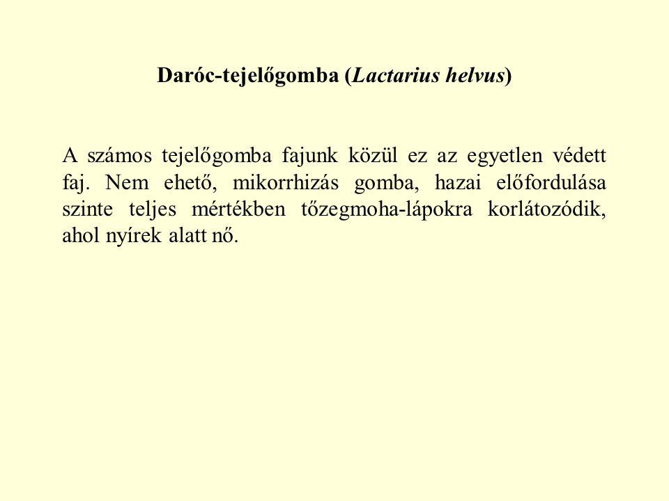 Daróc-tejelőgomba (Lactarius helvus) A számos tejelőgomba fajunk közül ez az egyetlen védett faj. Nem ehető, mikorrhizás gomba, hazai előfordulása szi
