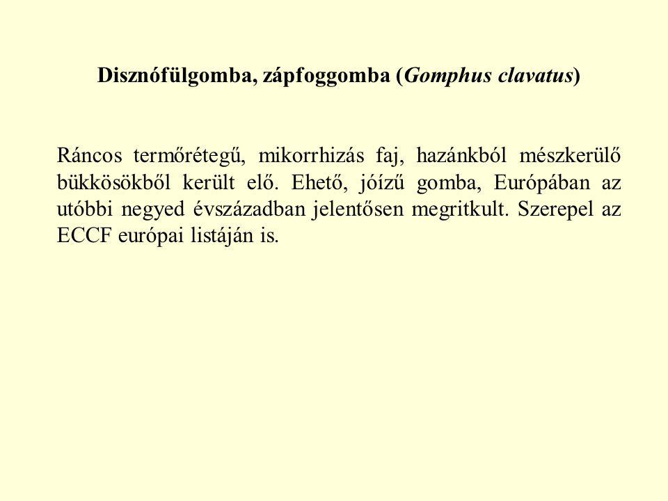 Disznófülgomba, zápfoggomba (Gomphus clavatus) Ráncos termőrétegű, mikorrhizás faj, hazánkból mészkerülő bükkösökből került elő. Ehető, jóízű gomba, E