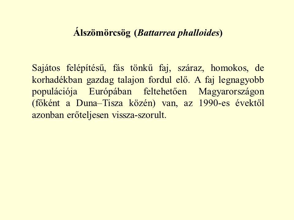 Álszömörcsög (Battarrea phalloides) Sajátos felépítésű, fás tönkű faj, száraz, homokos, de korhadékban gazdag talajon fordul elő. A faj legnagyobb pop