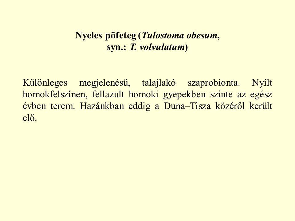 Nyeles pöfeteg (Tulostoma obesum, syn.: T. volvulatum) Különleges megjelenésű, talajlakó szaprobionta. Nyílt homokfelszínen, fellazult homoki gyepekbe