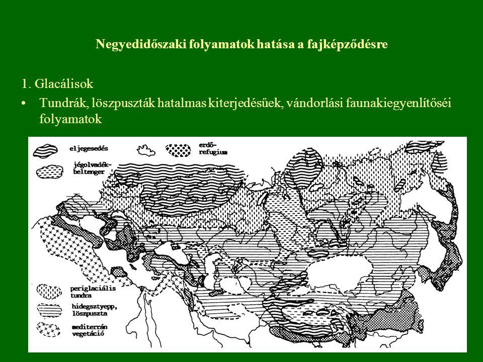 1. Glacálisok Tundrák, löszpuszták hatalmas kiterjedésűek, vándorlási faunakiegyenlítőséi folyamatok Negyedidőszaki folyamatok hatása a fajképződésre