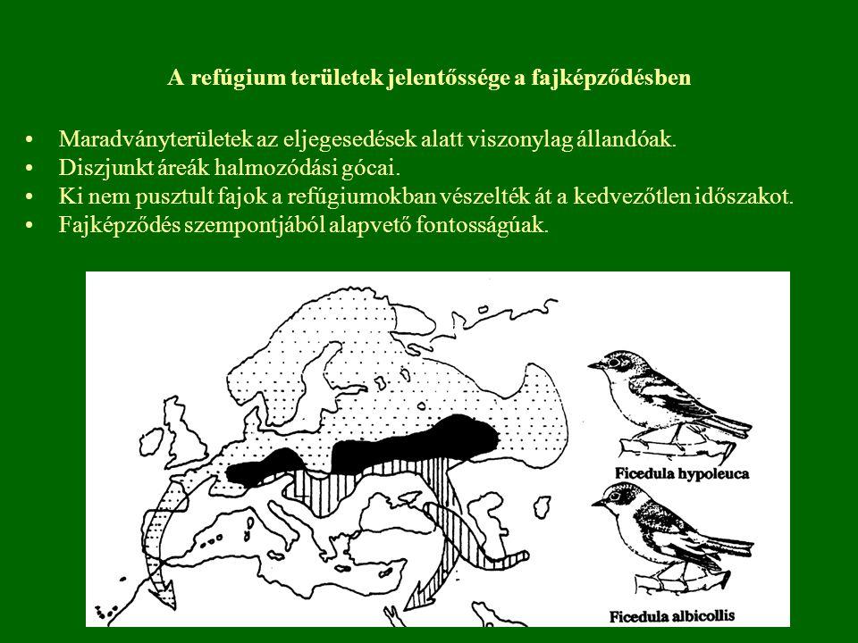 A refúgium területek jelentőssége a fajképződésben Maradványterületek az eljegesedések alatt viszonylag állandóak. Diszjunkt áreák halmozódási gócai.