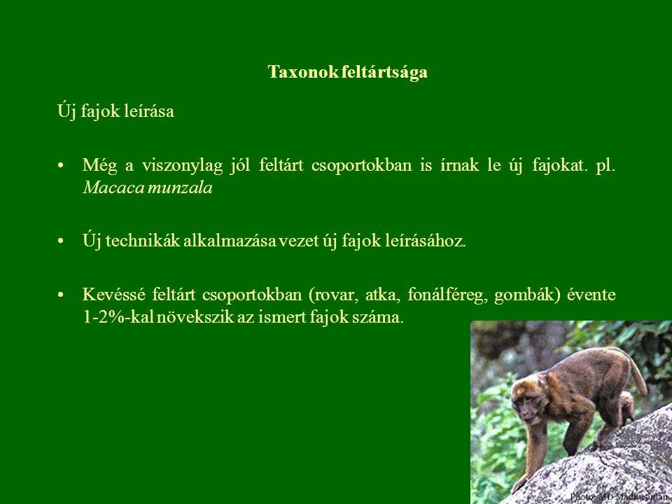Új fajok leírása Még a viszonylag jól feltárt csoportokban is írnak le új fajokat. pl. Macaca munzala Új technikák alkalmazása vezet új fajok leírásáh