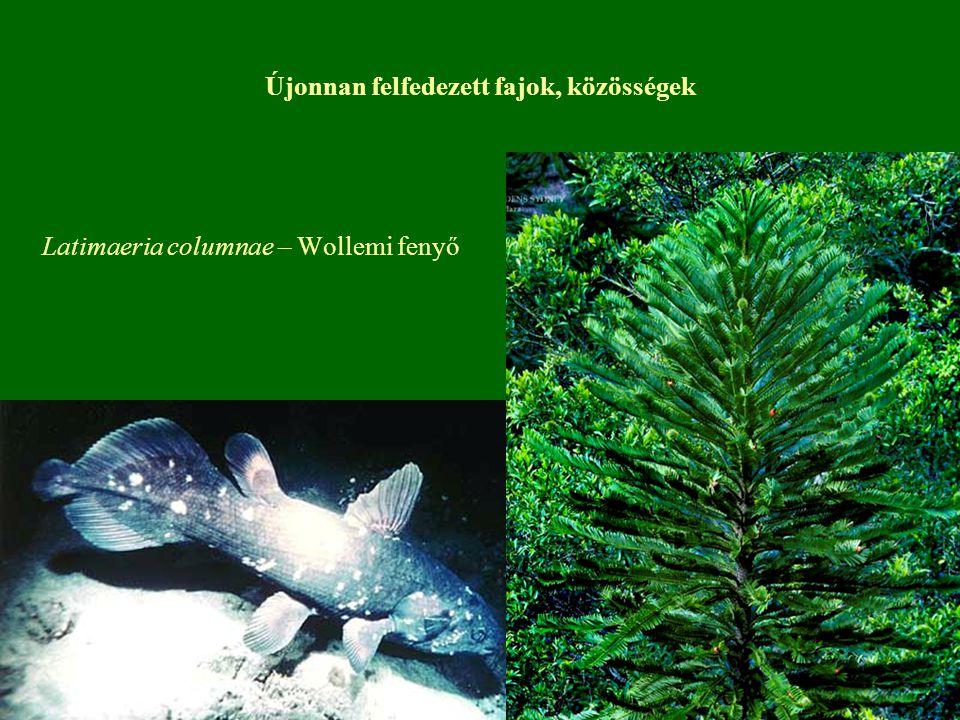 Újonnan felfedezett fajok, közösségek Latimaeria columnae – Wollemi fenyő