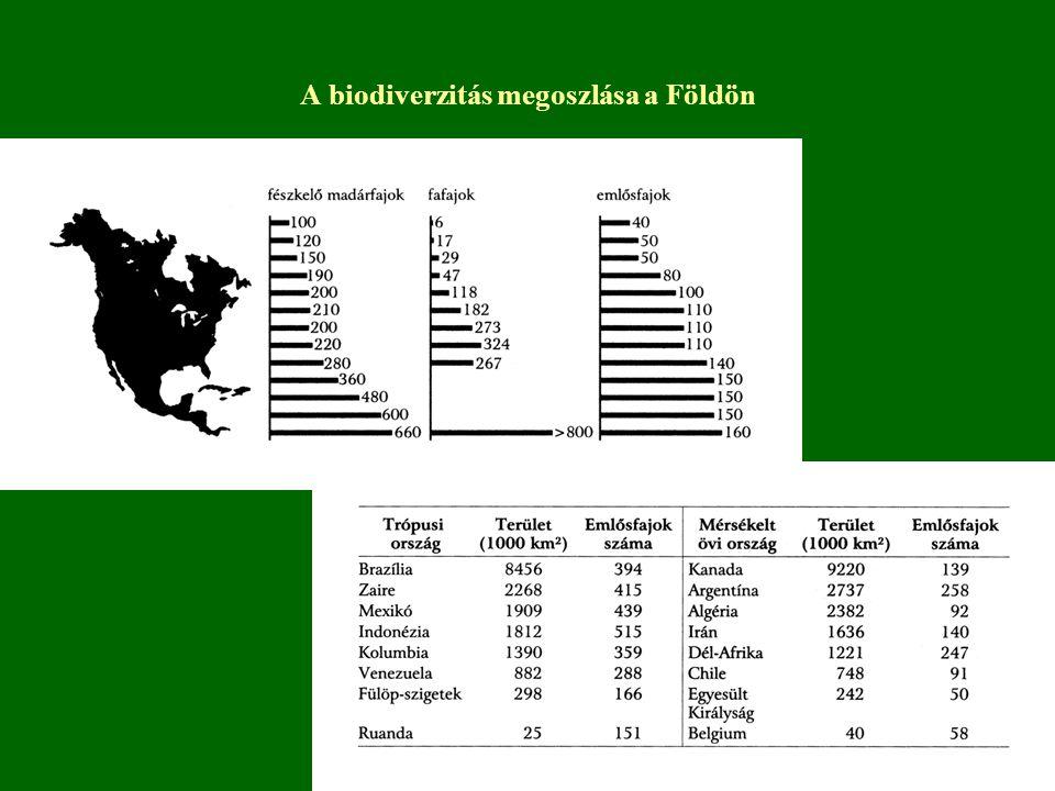 Biodiverzitási gócok – legfajgazdagabb élőhelyek 1.trópusi esőerdő – rovarok 2.korallzátonyok – egyenletesebb eloszlás 3.mélytengerek – fajképződésre hosszú idő állt rendelkezésre, nagy terület, kontinensek biztosította földrajzi izoláció, környezet viszonylagos stabilitása 4.trópusi nagy tavak – nagy produktivitású, izolált élőhelyek 5.szárazabb trópusi területek 6.mediterrán területek magas geológiai kor változatos termőhelyi viszonyok, szélsőséges környezeti feltételek; gyakori tüzek miatt gyors fajkeletkezés
