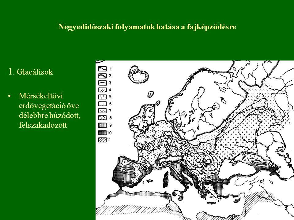 Földtörténeti okok Jégkorszak Átmeneti helyzetű flóra- faunaelemek találkozási övezete.