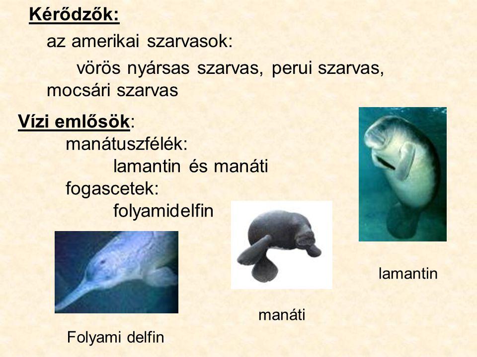 Kérődzők: az amerikai szarvasok: vörös nyársas szarvas, perui szarvas, mocsári szarvas Folyami delfin lamantin manáti Vízi emlősök: manátuszfélék: lamantin és manáti fogascetek: folyamidelfin