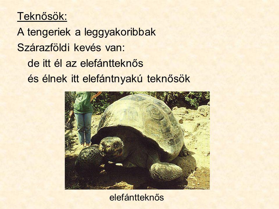 Teknősök: A tengeriek a leggyakoribbak Szárazföldi kevés van: de itt él az elefántteknős és élnek itt elefántnyakú teknősök elefántteknős