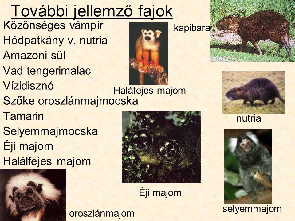 További jellemző fajok Közönséges vámpír Hódpatkány v.