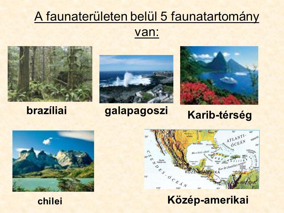 A faunaterületen belül 5 faunatartomány van: brazíliai chilei Karib-térség Közép-amerikai galapagoszi