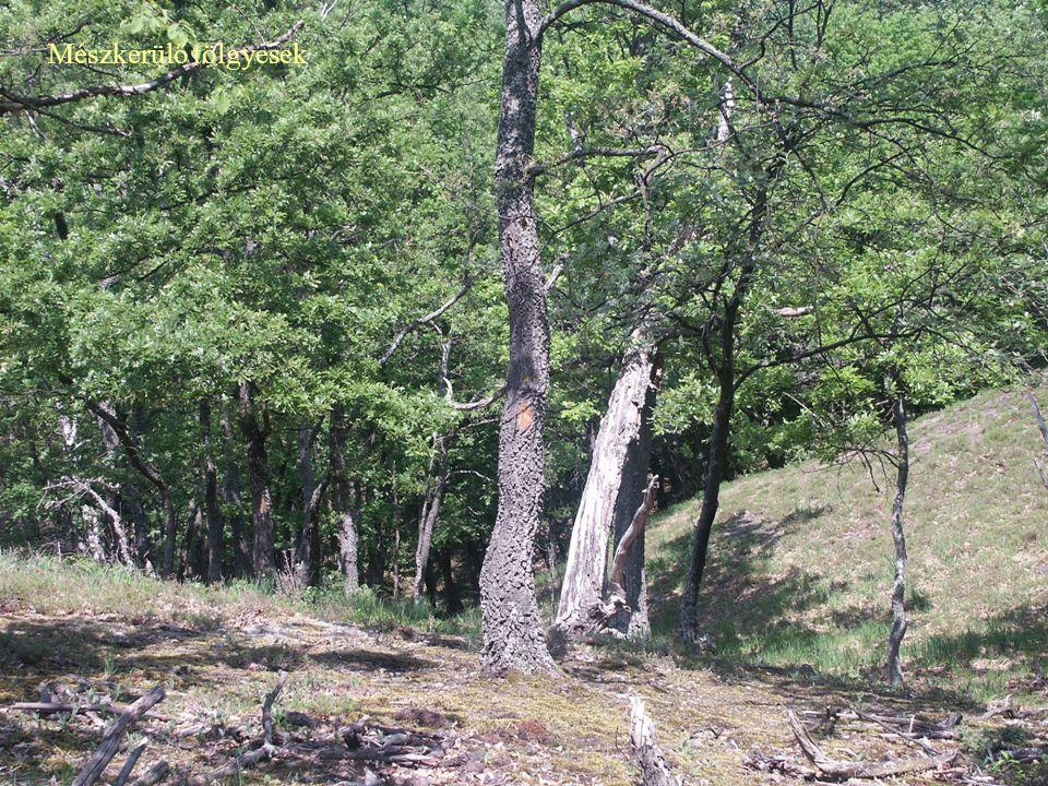 """""""Sebezhető (VU) – 12 társulás (19,4%) """"Veszélyeztetett (EN) – 32 társulás (51,6%) """"Kipusztulással veszélyeztetett (CR) – 17 társulás (27,4%) """"Eltűnt (EX) – 1 társulás (1,6%) Edafikus erdőtársulások veszélyeztettsége Klímaregionális erdőtársulások veszélyeztettsége (az erdősztyep-erdők nélkül) """"Sebezhető (VU) – 13 társulás (50,0%) """"Veszélyeztetett (EN) – 8 társulás (33,3%) """"Kipusztulással veszélyeztetett (CR) – 4 társulás (16,7%) """"Eltűnt (EX) – **"""