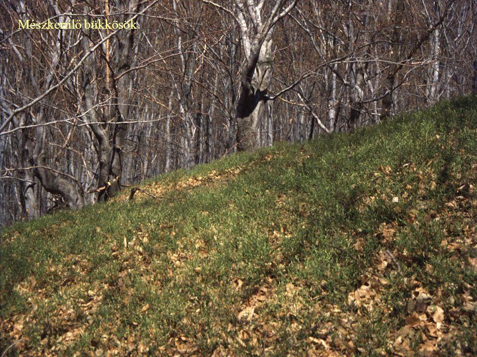 Sarjaztatás, alacsony vágásfordulók alkalmazása Gyakran leromlott, erodált termőhelyek Számos másodlagos állomány Vadállomány hatása Turizmus Természetvédelmi problémák és megoldások Talajvédelmi és természetvédelmi rendeltetés – véderdők Vadállomány szabályozása