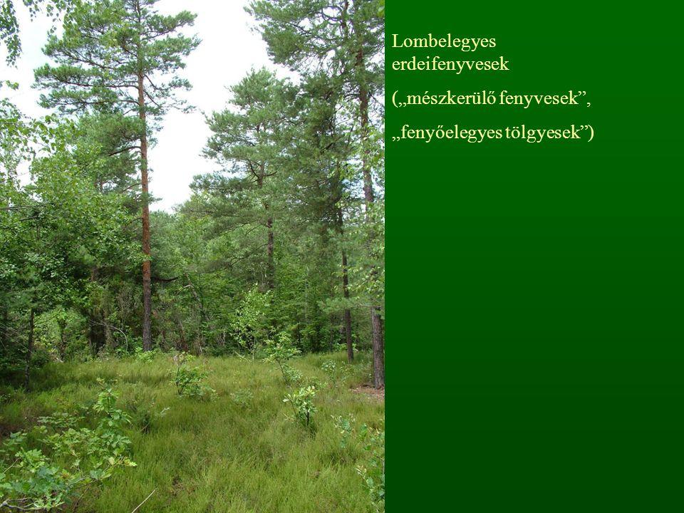 Mészkedvelő erdők Potenciális vegetáció (%)Mai maradvány (%) 3,00,8 Hegy- és dombvidéki társulások (12 társulás) Többletvízhatástól független termőhelyeken, déli kitettségben Bázisokban (főleg mészben) gazdag mállástermékű alapkőzeteken Sekély, száraz, erózióra hajlamos talajokon Gazdagon struktúrált, erős cserjeszintű állományok Gyenge fatermőképesség Bazofrekvens fajok dominanciája, nagy fajgazdagság Xerotherm elemekben gazdag