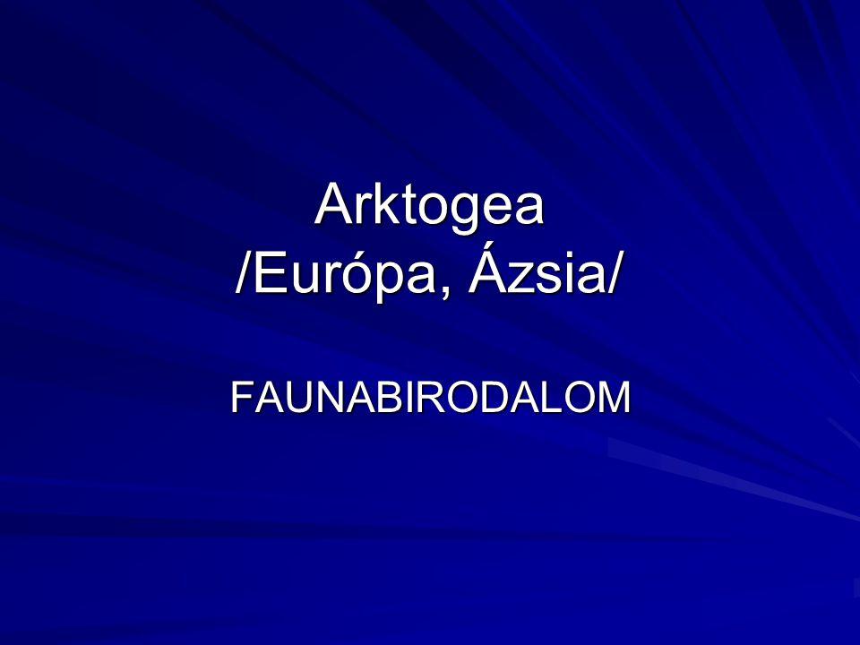 Arktogea /Európa, Ázsia/ FAUNABIRODALOM