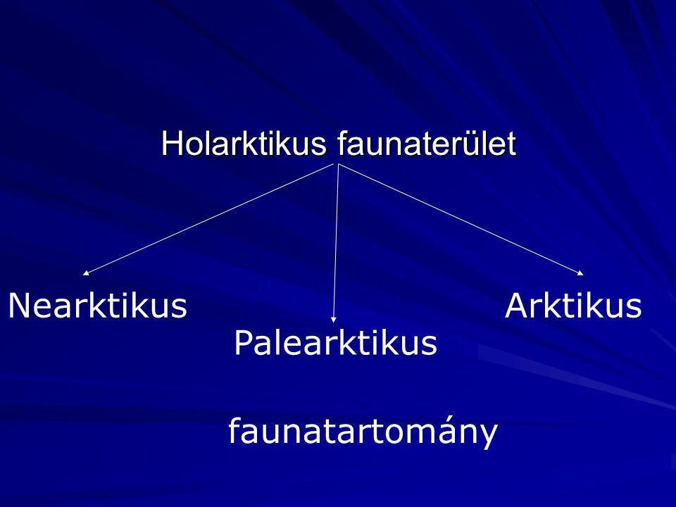 Holarktikus faunaterület Nearktikus Palearktikus Arktikus faunatartomány