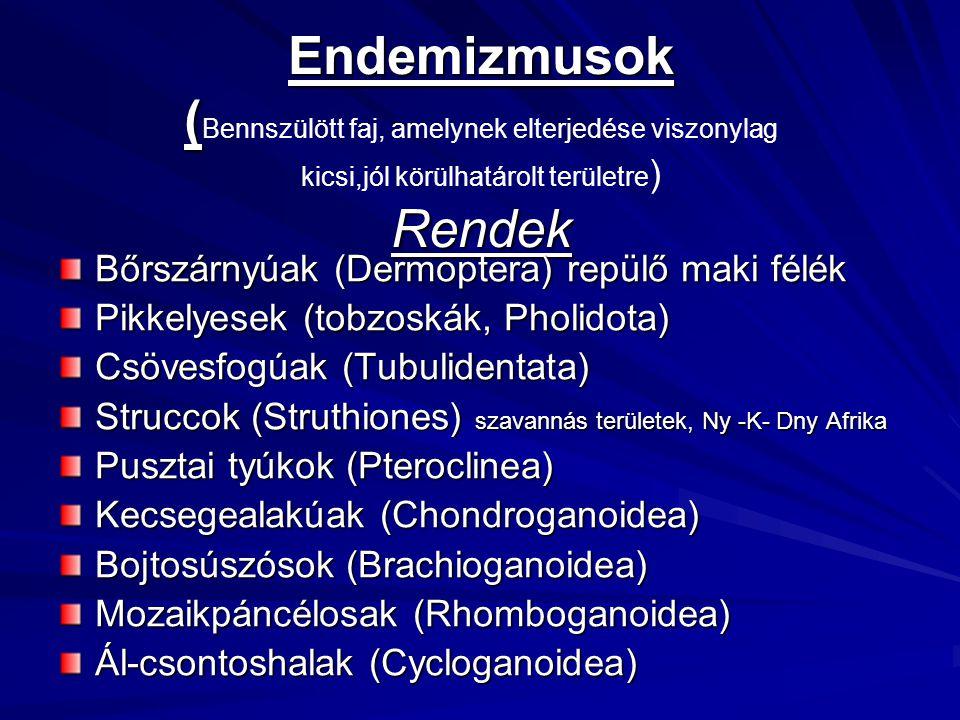 Endemizmusok ( Rendek Endemizmusok ( Bennszülött faj, amelynek elterjedése viszonylag kicsi,jól körülhatárolt területre ) Rendek Bőrszárnyúak (Dermopt