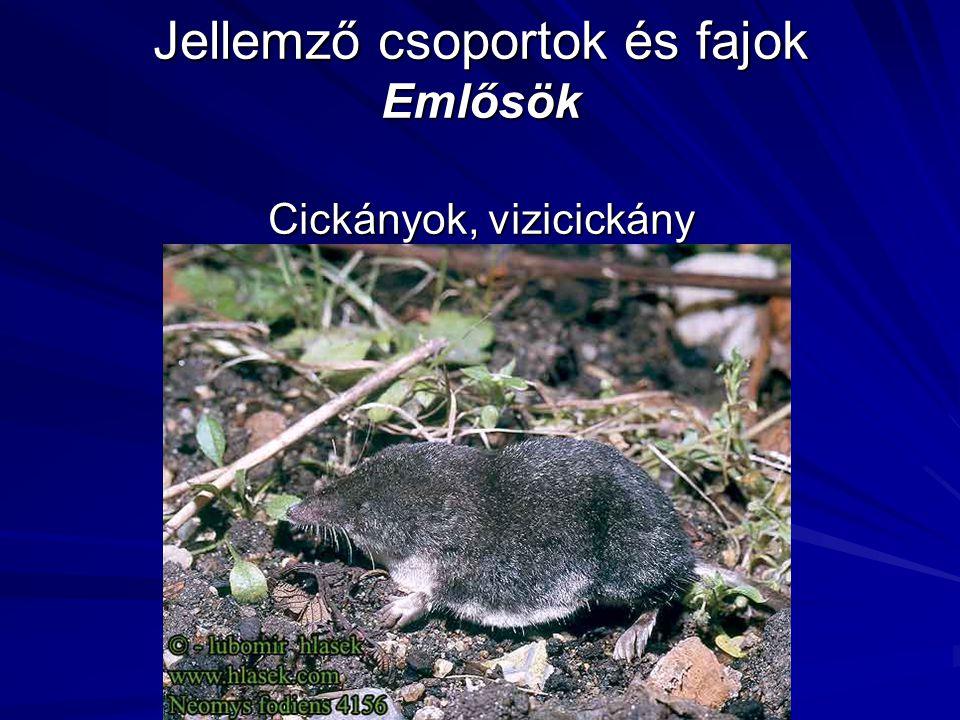 Jellemző csoportok és fajok Emlősök Cickányok, vizicickány