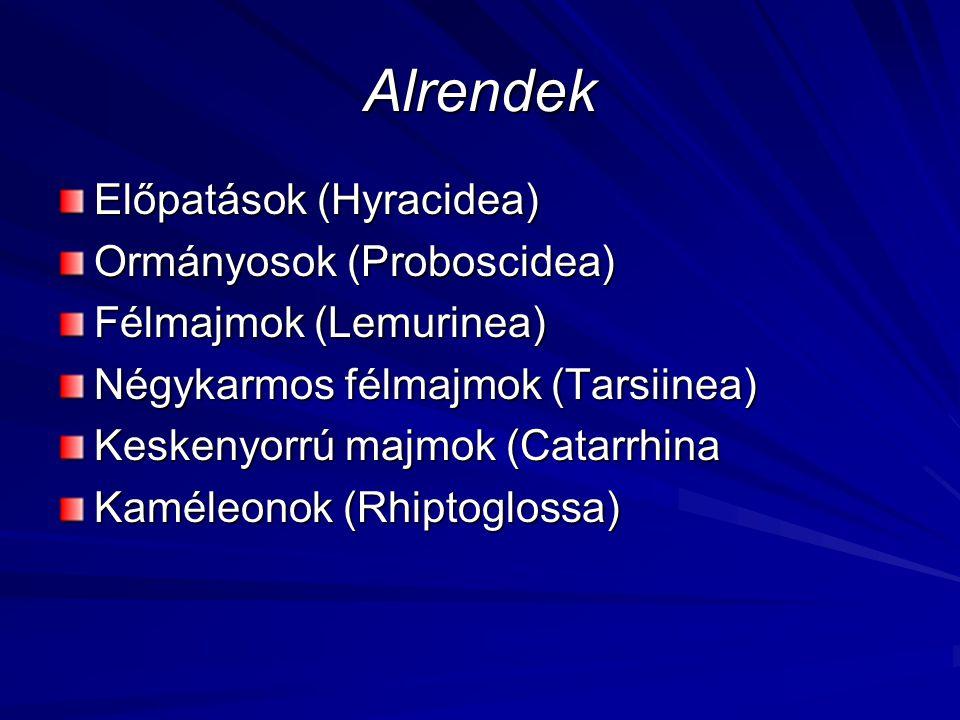 Alrendek Előpatások (Hyracidea) Ormányosok (Proboscidea) Félmajmok (Lemurinea) Négykarmos félmajmok (Tarsiinea) Keskenyorrú majmok (Catarrhina Kaméleo